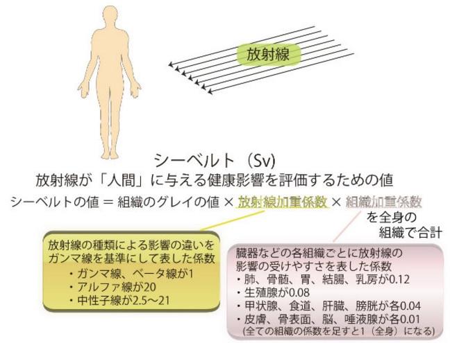 放射線の単位(グレイとシーベルト)