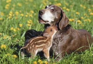 犬とうり坊