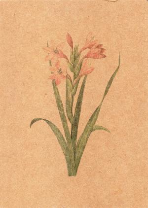 花 イラスト  アメリカ