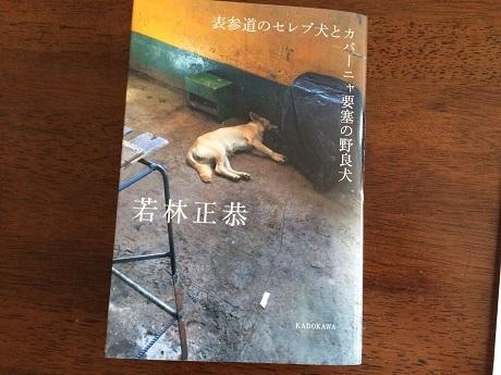 20170722(横)表参道のセレブ犬とカバーニャ要塞の野良犬の画像