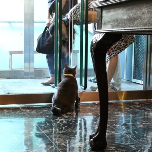 パンタレイ panta rhei 大田区 池上 ギャラリー ダミアン 猫 ねこ 店長 アクセサリー