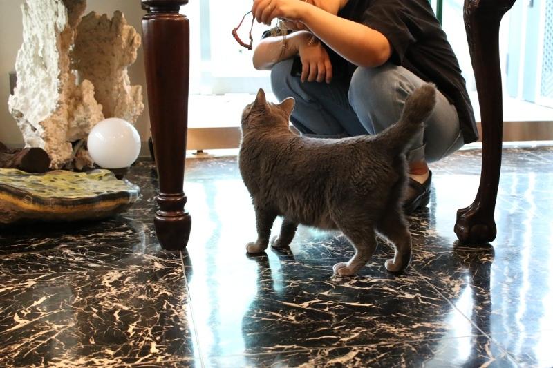 パンタレイ panta rhei 大田区 池上 ギャラリー 猫店長 ねこ ダミアン