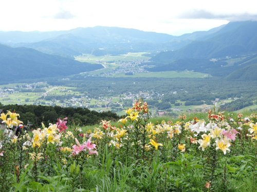 2岩岳ゆり園