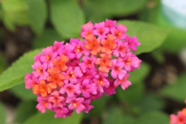 2017.07.17 いま咲く花たち-7