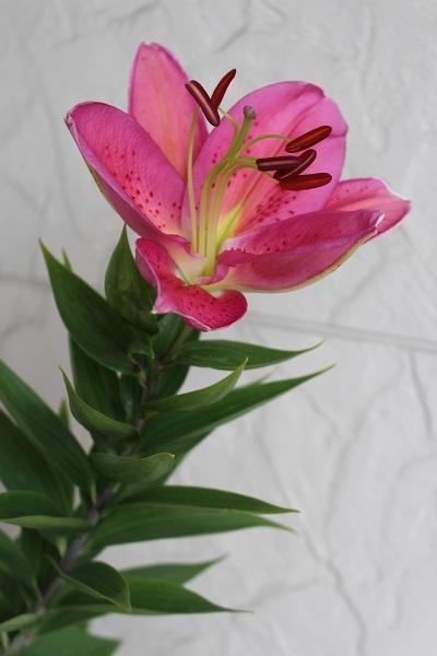 2017.07.17 いま咲く花たち-8
