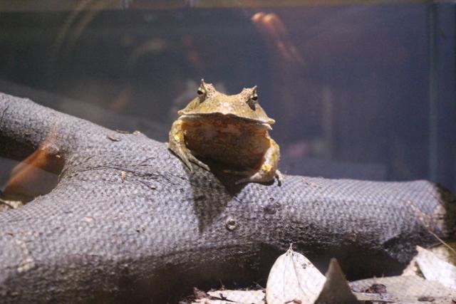 珍しいカエル