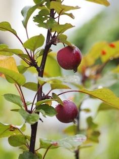 my-garden 003 (5)