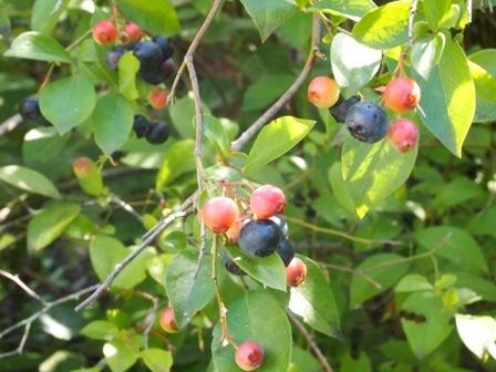 my-garden 106 (2)