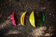 味覚の多様性