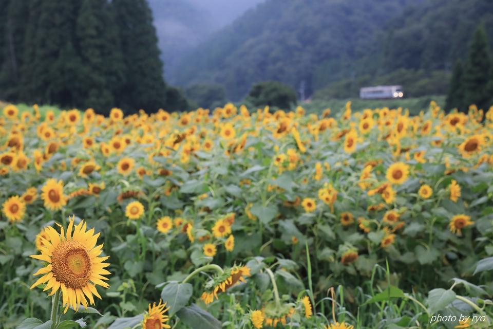 三江線の夏 ~大輪の花とともに~ _2