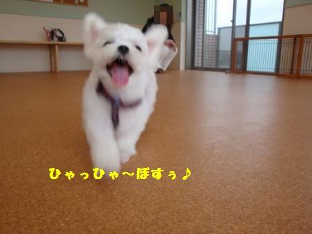 sayonarahiroki0.jpg