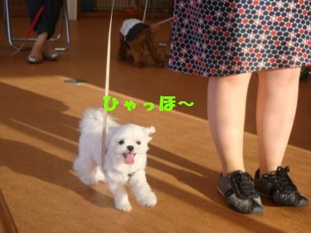 sayonarahiroki1.jpg