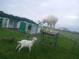 【写真】登り台に上がっているアランを下から見上げるポール