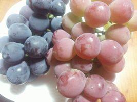 【写真】お土産にいただいた葡萄(ピオーネとゴルビー)