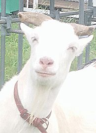 【写真】目を細めてニッコリ笑顔のアラン