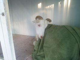 【写真】小屋で毛布をかけて休んでいるアランの様子