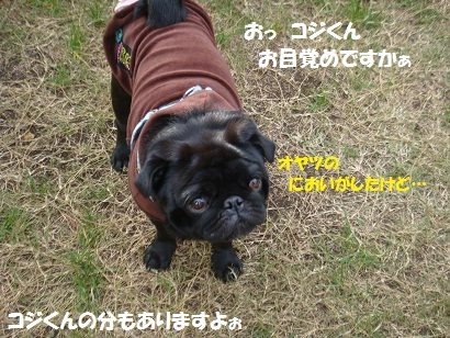 DSC08484_20110328012111 - コピー
