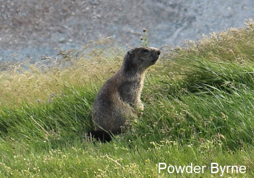 Marmott_20170825181121db2.jpg