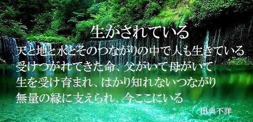 ≪生かされている≫