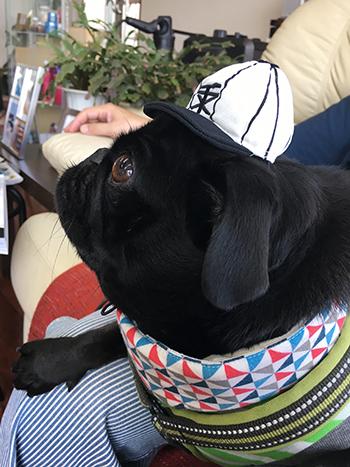 びみょーな野球帽