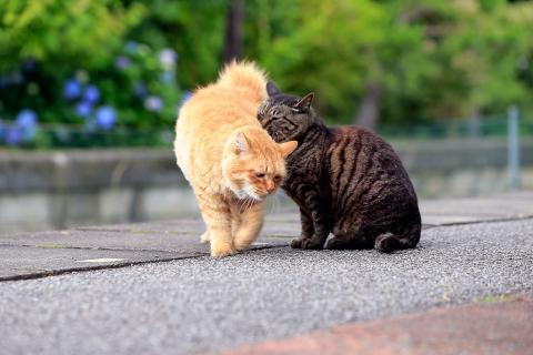ユウタとネネ