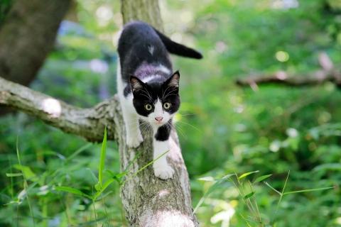 木登りベル