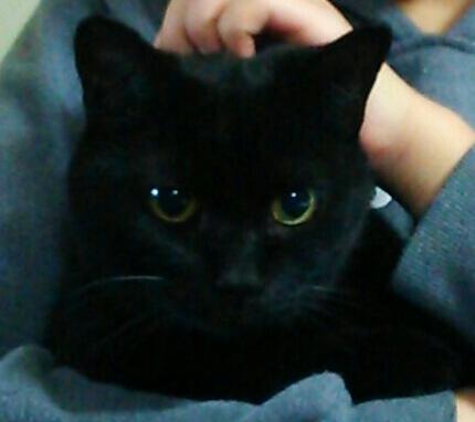アグネス家のボス猫ジジ君
