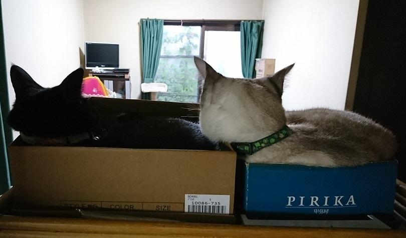 """京さんが、送ってくれた愛猫ちゃんたち名前は白い方が""""元ちゃん""""(元気)で、黒い方が""""アンコちゃん""""です1"""
