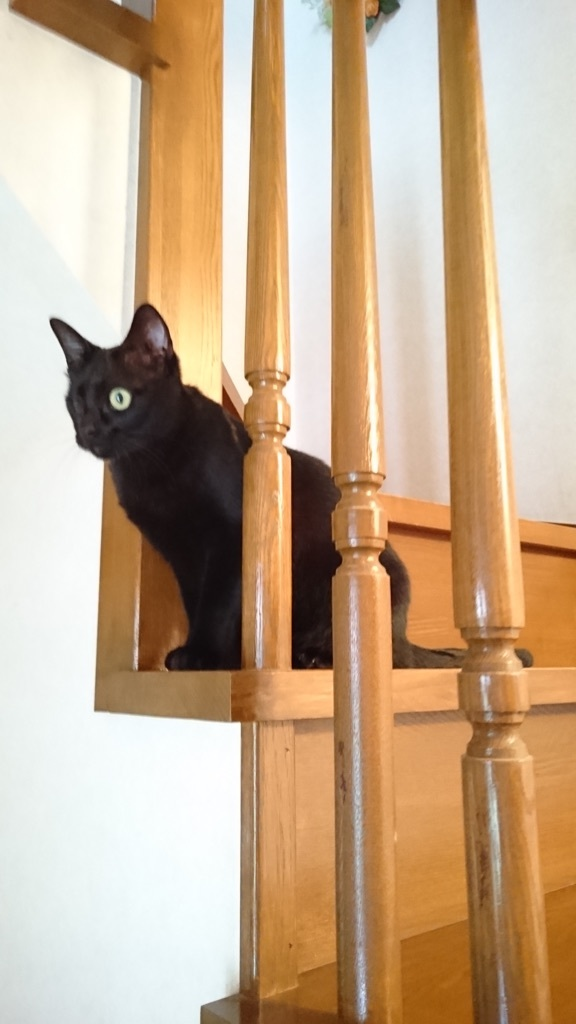 階段の隙間から顔を出す、らん丸(=^ェ^=)