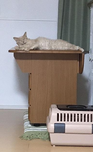 里親さんに預けた猫ちゃん5