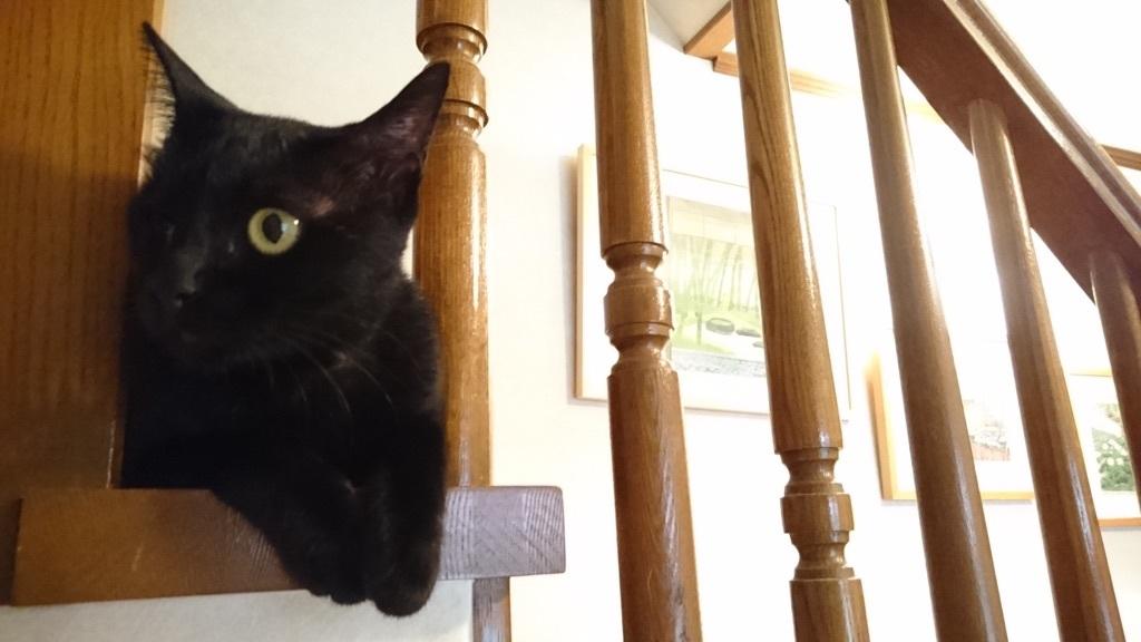 階段から外の景色を眺めるのがお気に入りの、らん丸✨❤✨