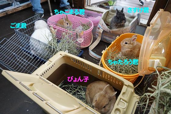 ぴょん子170820_09