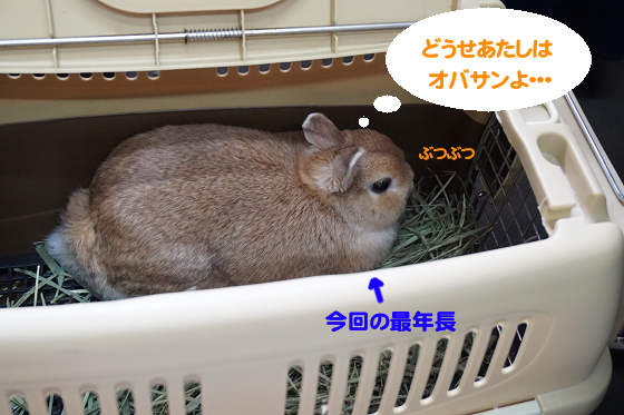 ぴょん子170820_17