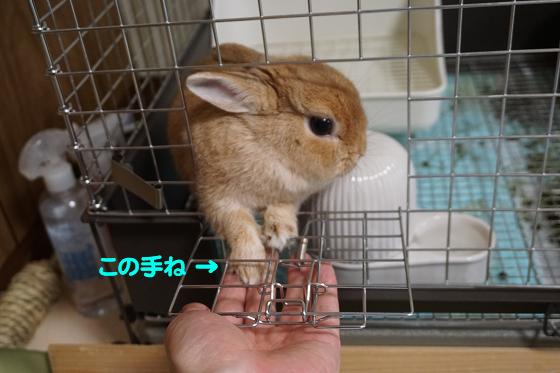 ぴょん子170908_05