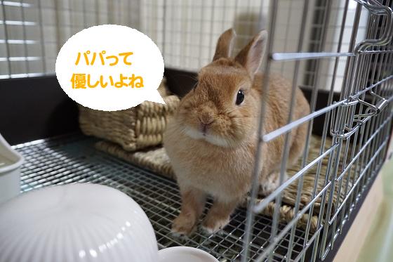 ぴょん子170908_19