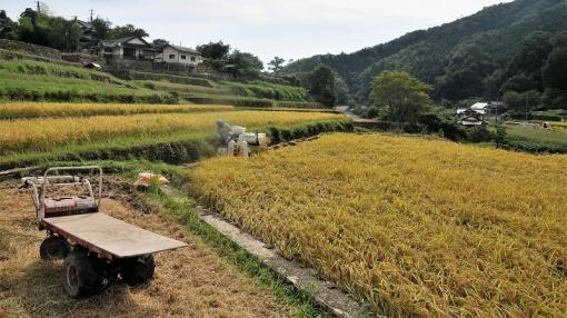 6420稲刈り179101