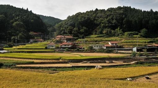 6422稲刈り179102
