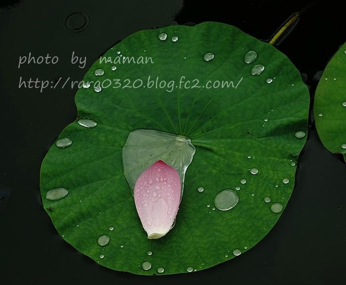 DSC01986 bbbbb
