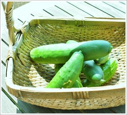 菜園の初採れは胡瓜