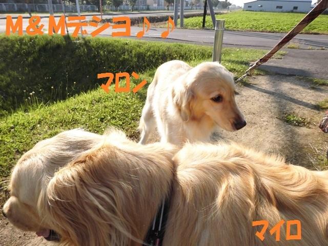 CIMG1443_P_2017071421450520f.jpg