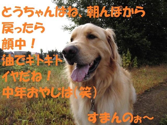 CIMG1676_P.jpg