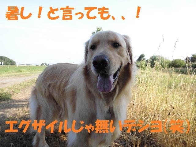CIMG1693_P.jpg