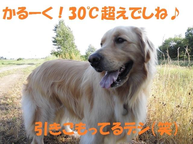 CIMG1694_P.jpg