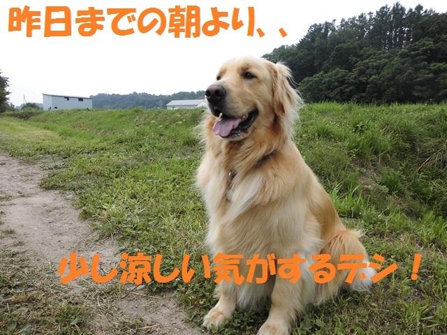 CIMG1698_P.jpg