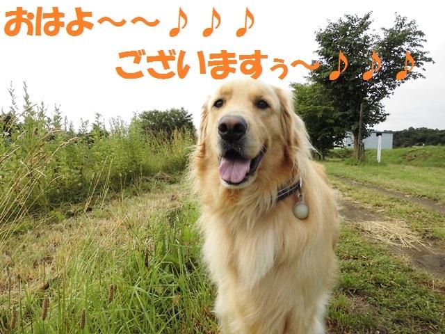 CIMG1701_P.jpg