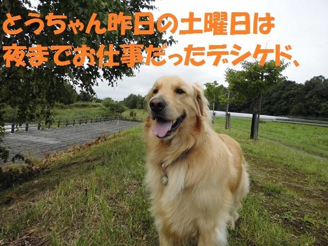 CIMG1732_P.jpg