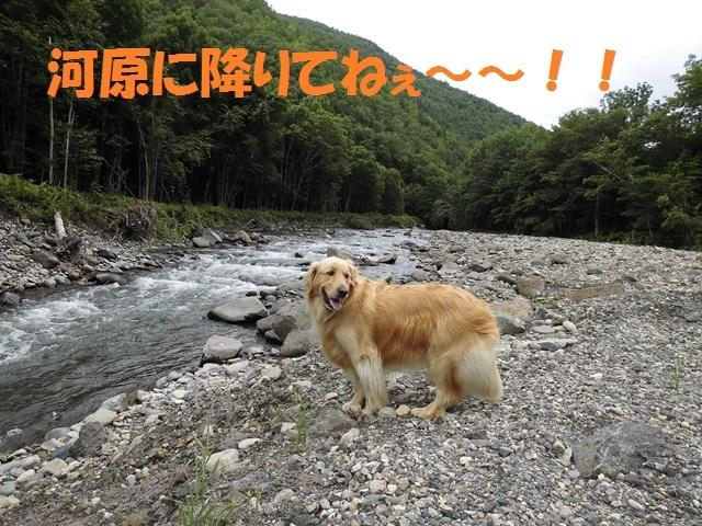 CIMG1768_P.jpg