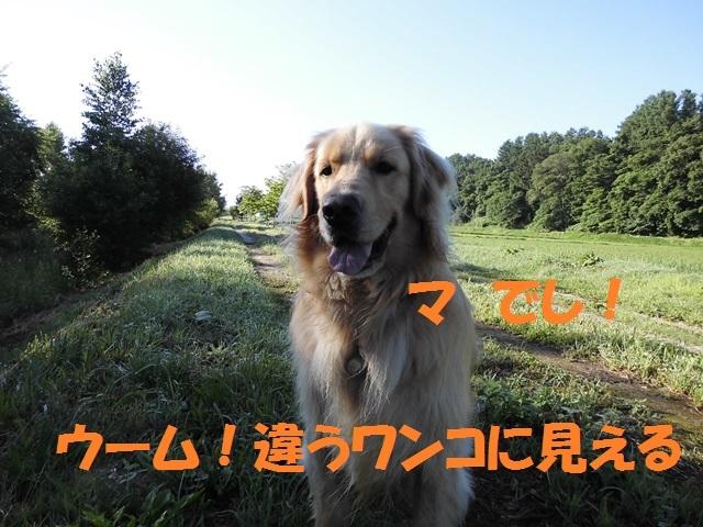 CIMG1812_P.jpg