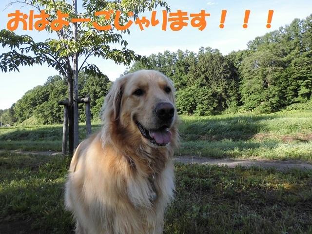 CIMG1814_P.jpg