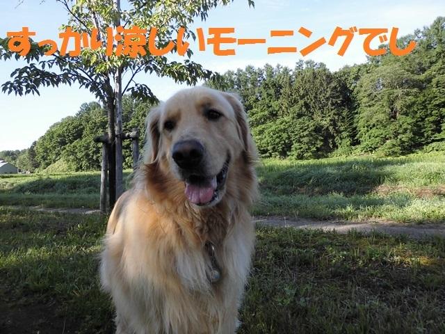 CIMG1815_P_201707272041001ed.jpg